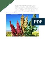 Bolivia Se Consolida Como Primer Productor Mundial de La Quinua