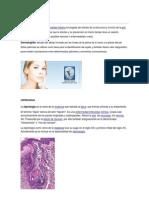 enfermedades.docx