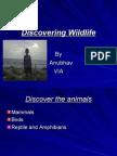 Discovering Wildlife