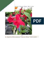 Orquidea Roja