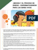 procesodeovogenesisyespermatogenesis-120219185610-phpapp01