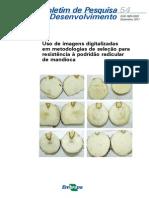 boletim_54_Podridão Radicular.pdf