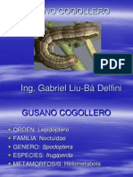 Cogollero