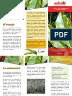 Brochure Roya