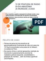 TRATAMENTO DE FRATURA DE RÁDIO EM PEIXE-BOI-DA-AMAZÕNIA (