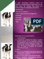 nutrienteoprincipioactivo-110909151723-phpapp02
