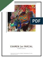 examen p1 teorico