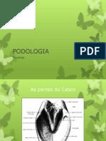 Podologia equinos 2013-1