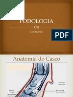 Podologia Ruminantes 2013-1 Orto