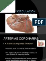 Anatoma Coronaria Expo