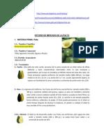 55446121 Estudio de Mercado de La Palta