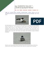 Kisah Mengharukan Burung Malang.pdf