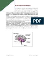 Bases Biologicas Del Aprendizaje Lectura 2