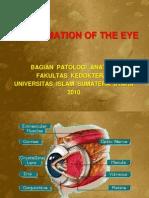 Patogenesis Radang Pada Organ Mata