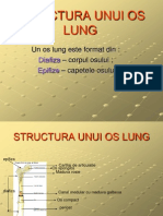 Structura Unui Os Lung