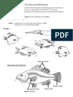 Bio11F Activity - Creer Votre Propre Cle Dichotomique - Poissons