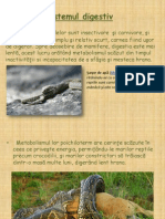 Reptile - Sistemul Digestiv Si Cel Excretor