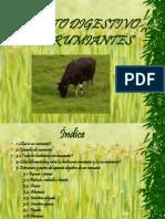 rumiantes-1208380118909260-9