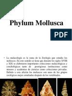 Clase I. Phylum Mollusca. Zoologia II