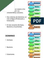 Clasificacion_jerarquias