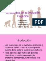 evidenciasdelaevolucinorgnica-100803172510-phpapp02