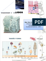 Clase 9 - Tipos de Celula y Estructura