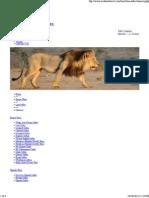 LION SAFARIS ROCK TOURS AND TRAVEL