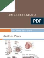 Lbm 4 Urogenitalia