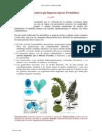 13_14_Pteridofitos_texto