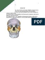 Guia 10 Terapia Osteoartrologia de Cabeza