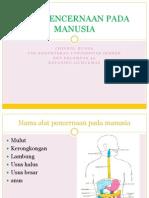 Anatomi Digestive
