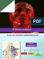 Circulatorio Octavo