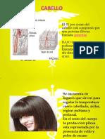 Glandulas Piel