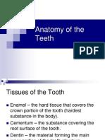 02.Anatomy of the Teeth - Edited