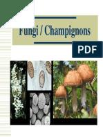 2.Fungi Cours JPM 2006 Jpeg