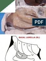 Endoscopic Anatomy of Nose