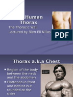 The Human Thorax