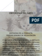 Ontogenia Del Gato
