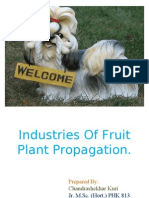 Industries of Fruit Plant Propagtion 813