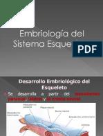 Sistema Esqueletico Embriologia