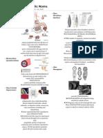 Pharmacia ponderosa parthenogenesis asexual reproduction
