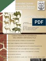 Artiodactilos-Mastozoologia A16
