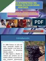 Lectura interpretada en cocos gram positivos 07092013.pptx