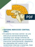 Presentación1 cerebro