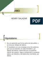 Hipotalamo  neuroanatomia funcional