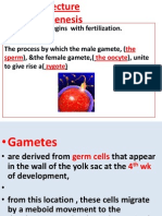 2nd Lecture New Gametogenesis