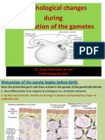 3rd Lecture Morphological Changes During Maturation o Te Gametea