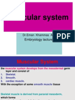 14lecture Muscular System