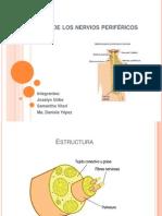 Transtornos de los nervios periféricos
