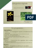 morphogenese-vegetale